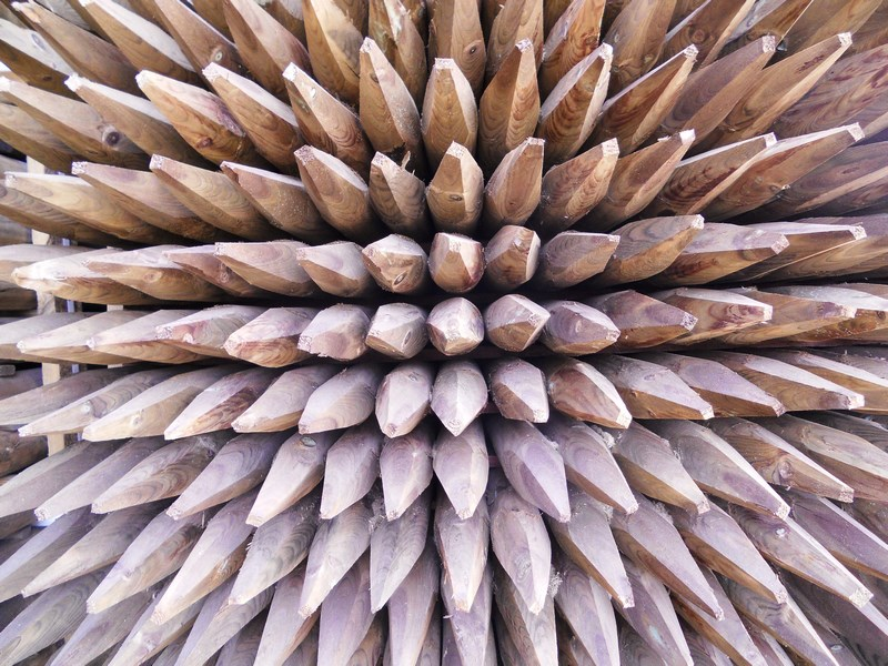 Tutores de madera tratada de excelente calidad al mejor precio for Madera de pino tratada