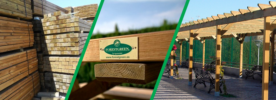 forestgreen_Portada