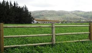 Vallados y talanqueras Forestgreen