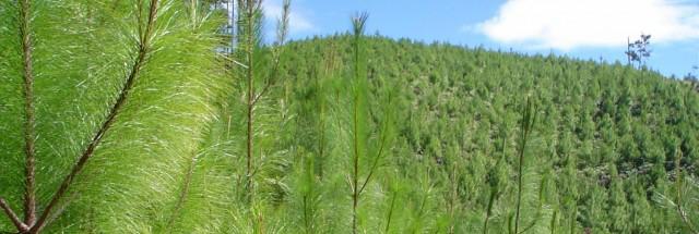 Toda la madera que usamos proviene de bosques sostenibles
